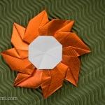Flower Gaillardia